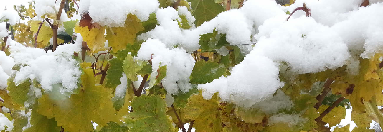 Herbst Winter 2012